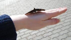 在手的蝴蝶 免版税库存图片