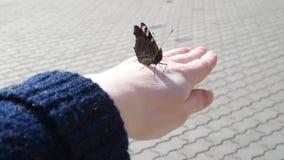 在手的蝴蝶 免版税库存照片