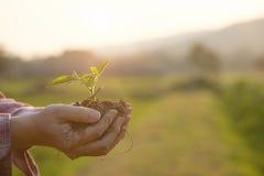 在手边哺育婴孩植物农业概念 库存图片