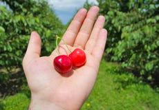 在手边拿着樱桃的人 免版税库存图片