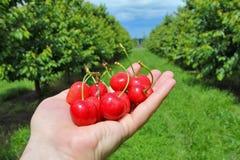 在手边拿着莓果的人 库存照片
