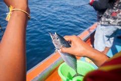 在手边拿着金枪鱼与在小船的勾子的渔夫和 免版税库存图片
