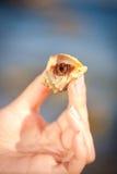 在手边爬行的寄居蟹 免版税库存图片