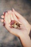 在手边爬行的寄居蟹 免版税图库摄影