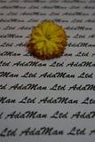 在打印的背景的黄色万寿菊 免版税图库摄影