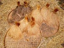 在打谷的篮子的泰国米 免版税图库摄影