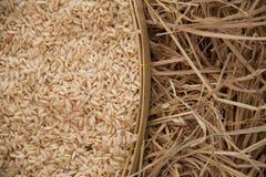 在打谷的篮子的米 免版税图库摄影