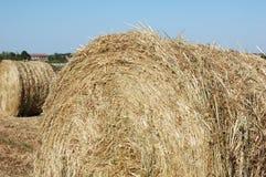 在打谷的领域的干草捆 免版税库存照片
