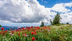 在托德山的五颜六色的野花 免版税库存照片