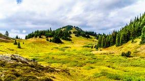 在托德山的供徒步旅行的小道在不列颠哥伦比亚省,加拿大太阳峰顶附近村庄  库存图片