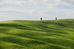 在托斯卡纳的小山的绿色麦田 免版税图库摄影