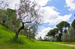 在托斯卡纳,步行反弹在圣吉米尼亚诺附近的公园 免版税库存照片