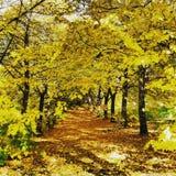 在托斯卡纳vicchio树黄色mugello的秋天 免版税库存照片