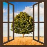 在托斯卡纳wheatfield视图的树从窗口-骗局 免版税库存照片