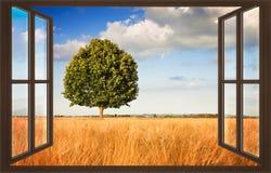 在托斯卡纳wheatfield视图的被隔绝的树从窗口-骗局 库存图片