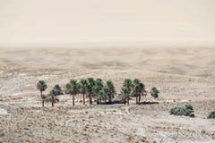 在托泽尔附近的小绿洲在撒哈拉大沙漠 免版税库存照片