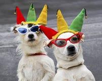 在扮小丑的狗附近 免版税库存图片