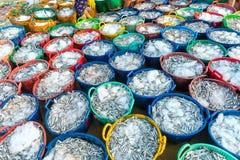 在抓住以后的鲥鱼被卖在海鲜市场上 库存照片