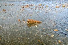 在投下海以后出现的壳 免版税库存照片