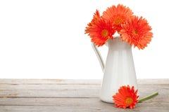 在投手的橙色大丁草花 库存图片