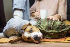 在投掷毯子的困狗有人的 库存照片