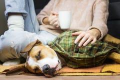 在投掷毯子的睡觉狗有人的 库存照片