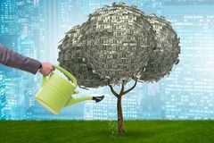 在投资概念的商人浇灌的金钱树 库存照片
