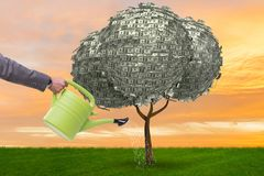 在投资概念的商人浇灌的金钱树 库存图片