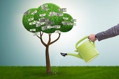 在投资概念的商人浇灌的金钱树 免版税库存图片
