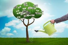 在投资概念的商人浇灌的金钱树 库存例证