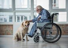 在抚摸狗的轮椅的镇静老男性在屋子里 库存照片