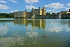 在护城河的天鹅在里氏古堡 肯特英国 免版税库存图片
