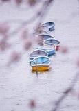 在护城河的明轮船在Chidorigafuchi,千代田,东京,日本 免版税库存照片