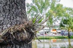 在护城河chaingmai泰国的花 库存照片