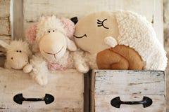 在抽屉的可爱的绵羊玩偶 库存图片