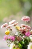 在抽象春天安静背景的菊花 免版税库存图片