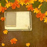在抽象美好的背景的明亮的多彩多姿的秋叶 库存图片