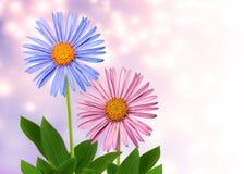在抽象背景的二朵花 免版税库存照片