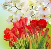 在抽象背景的庭院新鲜的红色郁金香 库存照片