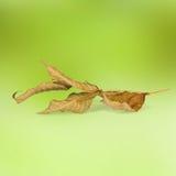 在抽象背景的明亮的秋叶 图库摄影