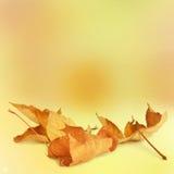 在抽象背景的明亮的秋叶 免版税库存图片