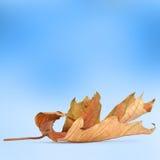 在抽象背景的明亮的秋叶 库存图片
