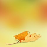 在抽象背景的明亮的秋叶 免版税库存照片