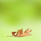 在抽象背景的明亮的秋叶 库存照片