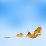 在抽象背景的明亮的秋叶 免版税图库摄影