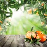 在抽象背景的普通话果子 库存图片