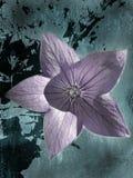 在抽象背景的狂放的紫色花 免版税库存照片