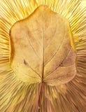 在抽象背景的秋天叶子 免版税图库摄影
