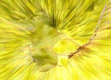 在抽象背景的秋天叶子 库存照片