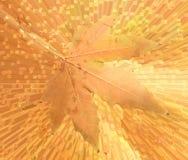 在抽象背景的秋天叶子 免版税库存照片